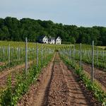 Arrowhead Spring Vineyards deal doubles its vineyards