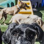 <strong>Crane</strong> Group getting into the pet industry with stake in boarding chain