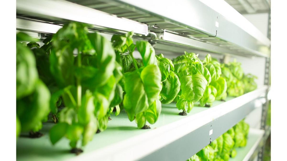 Indoor-farming startup FreshBox Farms plots expansion in