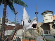 The shark at Playland.