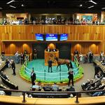 New York-bred auctions bring in $13.7 million in sales