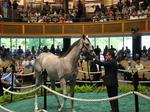Two yearlings surpass million dollar mark at Saratoga sales