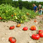 Drought officially a disaster for Upstate New York farmers