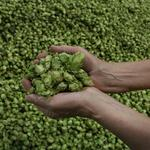 Portland craft brewers aren't dying by the hop vine