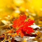 Why autumn is a good time to turn over a new leaf