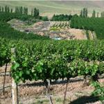 Fast-growing Precept buys 62 acres to expand vineyard operations