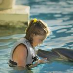 Want to swim with dolphins? You can't book that trip on TripAdvisor anymore