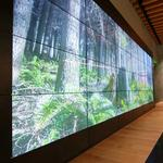 Weyerhaeuser shows off its new 'tree fort' headquarters in Seattle's Pioneer Square (Photos)