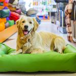 Pet store boom hits Columbus as local and national chains compete for owners' wallets