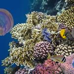 5 things to know, including a marine research hub likely in the making