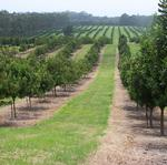 HILT purchases 211-acre easement to protect macadamia orchard