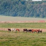 Maryland's horse farming industry sees boost from slots, report says