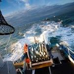 Washington salmon industry relieved as Alaska mine investor drops out