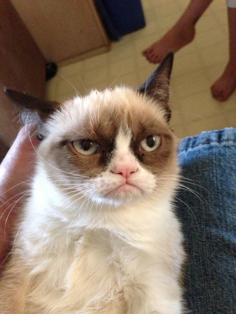 The original Grumpy Cat photo that went viral across the Internet and launched thousands of memes. Click through for more photos of Grumpy Cat.