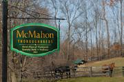 New York's thoroughbred industry is drawing interest from new investors, prompting horse breeder Joe McMahon to bring more stallions to his farm.