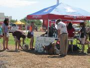 The University of Arizona sponsored a U-Pick on Saturday where people could pick produce in exchange for a donation.