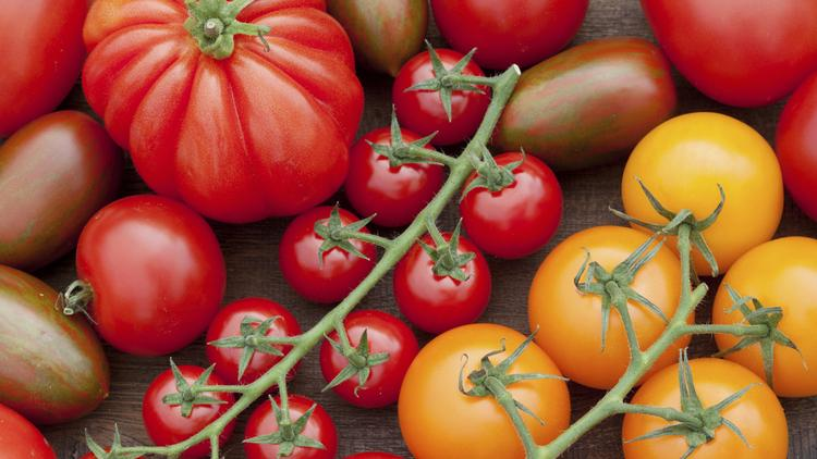 Midtown Sacramento's Sutter District will present the inaugural Sacratomato Week on July 21-27. Restaurants, bars and nightclubs in the area will offer tomato-themed selections.