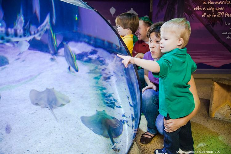 A youngster looks at stingrays in another Sea Life location.