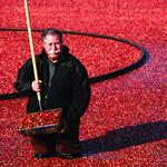 Group wants to squeeze more out of Mass. cranberry industry
