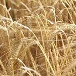 Bunge teams with Saudi firm to invest in Canadian grain