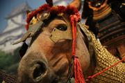 Samurai horses also wore helmets and armor to go into battle.