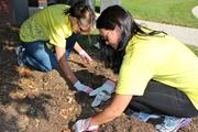 Debbie Kissire and Suzanne Pomeroy beautify the front of the building by replanting tulip bulbs at the foot of a tree.