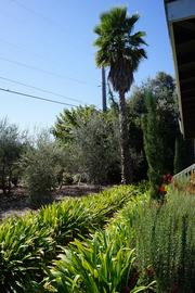 The gardens at Crocker & Starr. The group learned that spotting a palm tree in the vineyards signaled what was probably the first winery estate home in the area.