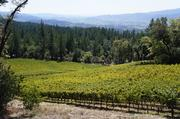 Cade is at 1,850 feet above sea level. Its soil is mostly condensed volcanic ash with tephra and loam.