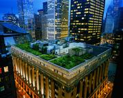 Thousands of grasses and plants were used to create Chicago City Hall's award-winning rooftop.