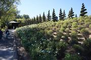 Owner Su Ha is the wine expert for the vineyard. Husband Peter Newton has a passion for landscaping and created the gardens on the estate.