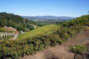 The Newton Vineyard offers a view of the Napa Valley from its place on Spring Mountain.