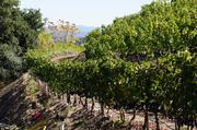 Newton says its winemaking is based on an old-world style of natural fermentation and without filters. Vines are planted on 112 separate parcels on the acreage.