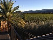 Another view of the Round Pond vineyards.