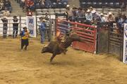 Once a rider was thrown, it was up to the bullfighters (they're separate from the rodeo clowns) to get the bull's attention and convince it go back in the pens.