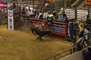 A raging bull will send just about anyone jumping for the fences.