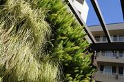 The living wall at 1122 Banyan St. in Honolulu.