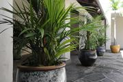 Large potted plants contribute to the Hawaiian sense of place at the Honolulu Museum of Art.