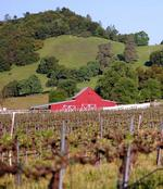Calaveras vineyard, winery up for sale