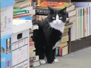 Last Word Bookshop (220 S. 40th St.), a used book shop with a resident cat, was opened by one of the owners of the former Book Trader on South Street.