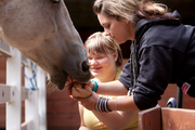 """Mt. Hood Kiwanis Camp  Learning how to overcome her fear of horses, a camper feeds """"Big Rosie"""" Budget: $1.7 million Staff: 9 Executive director: Kaleen Deatherage Board chair: Andy Jones"""