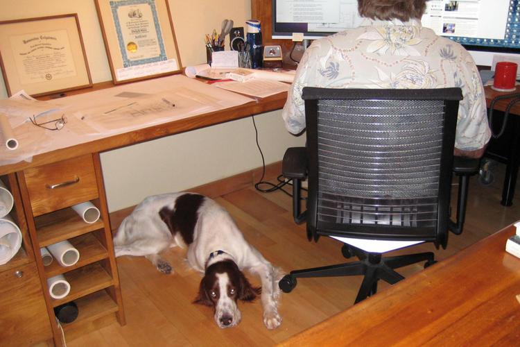 One of Architect Pip White's two dogs rests in his Honolulu office, helping to reduce stress for him and his staff who are often under tight deadlines.