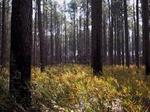 N.C. State sells 79,000-acre Hofmann Forest for $150M