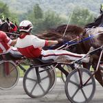 State limits use of whip in harness racing