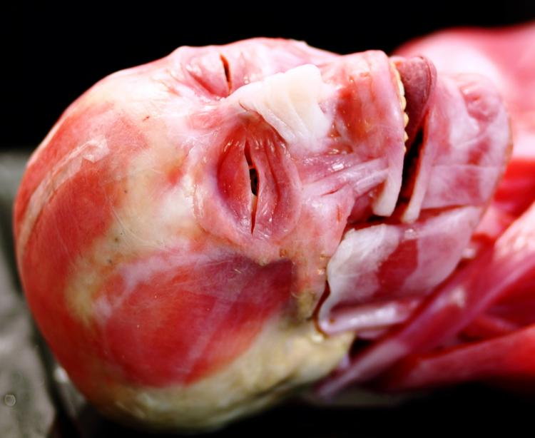 SynDaver Labs will pump upwards of $20 million into an expansion effort in Phoenix.