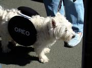 Oreos, made by Deerfield-based Mondelez International (NASDAQ: MDLZ) are instantly recognizable and such a costume can come from a simple DIY project. Works for bipeds as well as quadripeds.