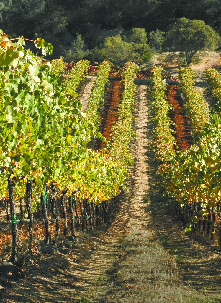Winemaker Ann Kraemer keeps 20 percent of her grapes for her own Yorba and Shake Ridge labels.
