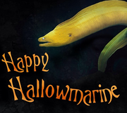 A Halloween greeting from the National Aquarium.