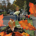 Urban forestry co-op brings the forest to the city (Video)