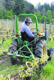 Brent Charnley, Lopez Island Vineyards winemaker and president of the Puget Sound Wine Growers Association, plows away weeds. The organic winery logs more than $400,000 in annual sales.