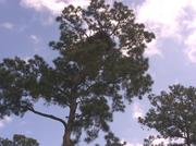 The eagle's nest high above the 18th hole at the Nicklaus Course in Carlton Woods.